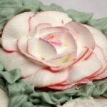 Ruže od šlaga video