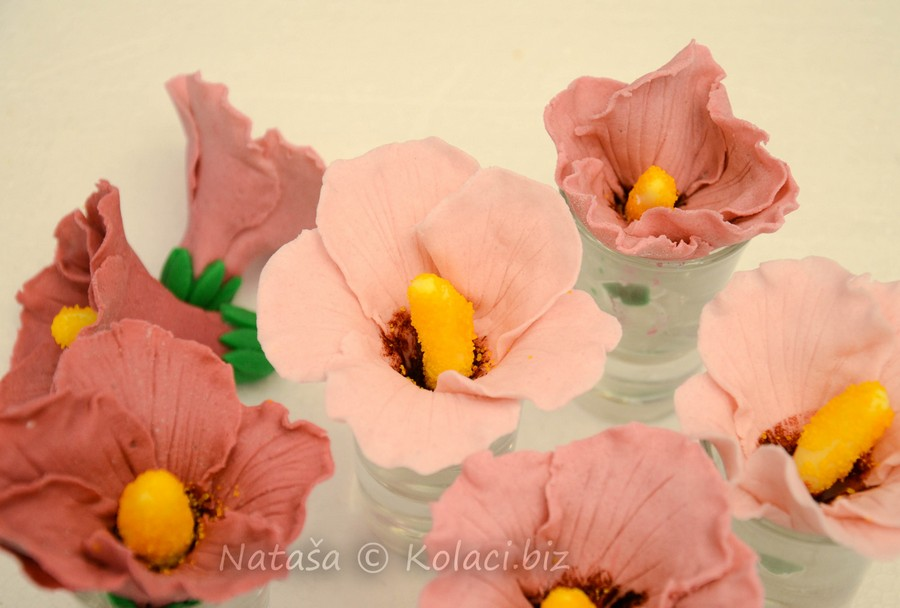 cvijeće od tičina hibiskus